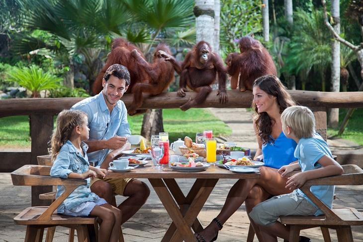 orangutan004.jpg