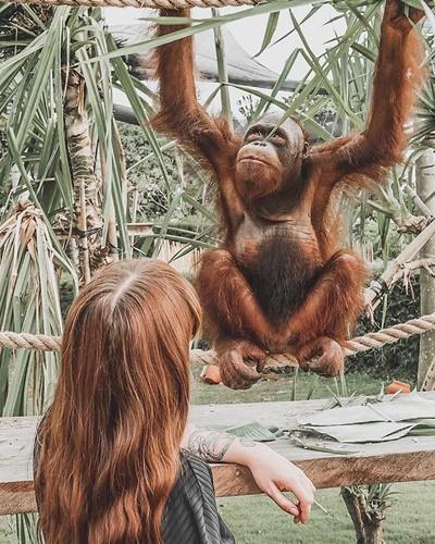 orangutan010.jpg