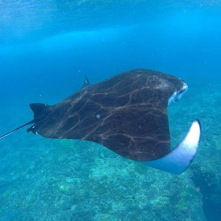 snorkelingsafari12.jpg