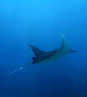 snorkelingsafari4.jpg