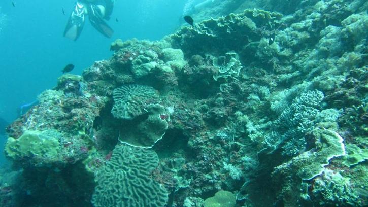 snorkelingsafari5.jpg