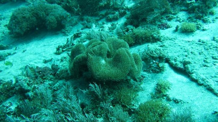 snorkelingsafari7.jpg