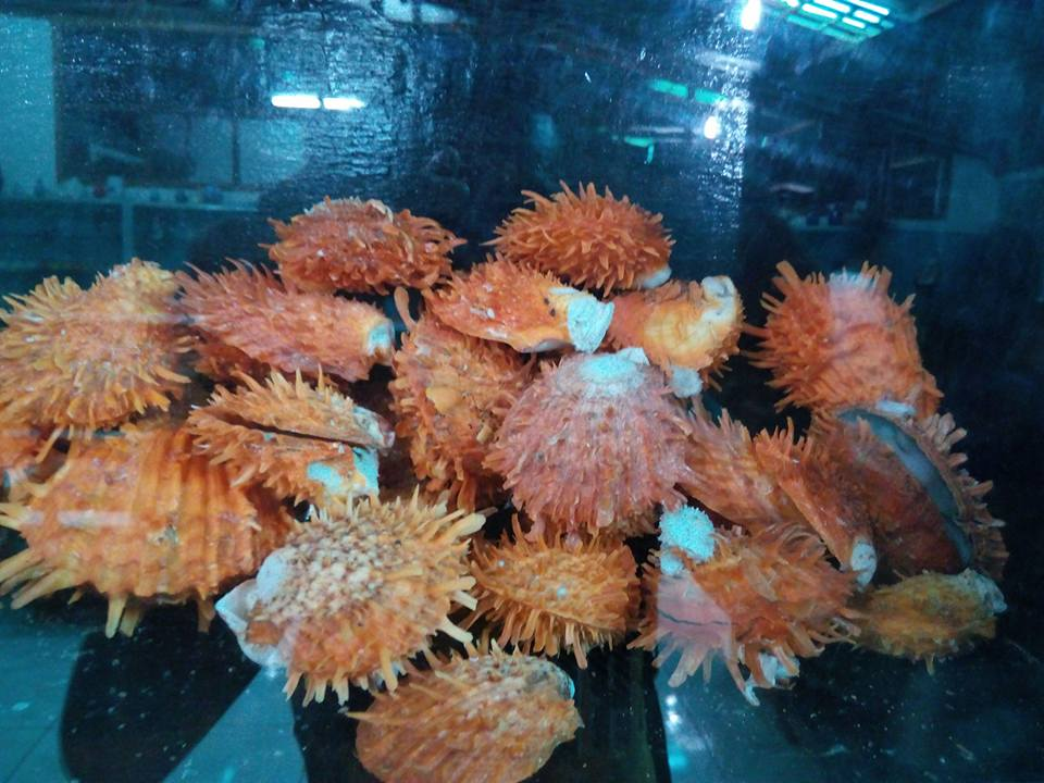 shellmuseum4.jpg