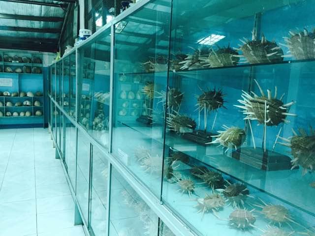 shellmuseum8.jpg