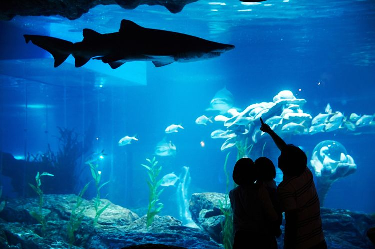 busan-sea-life-aquarium01.jpg