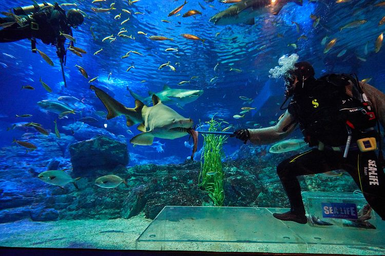 busan-sea-life-aquarium09.jpg