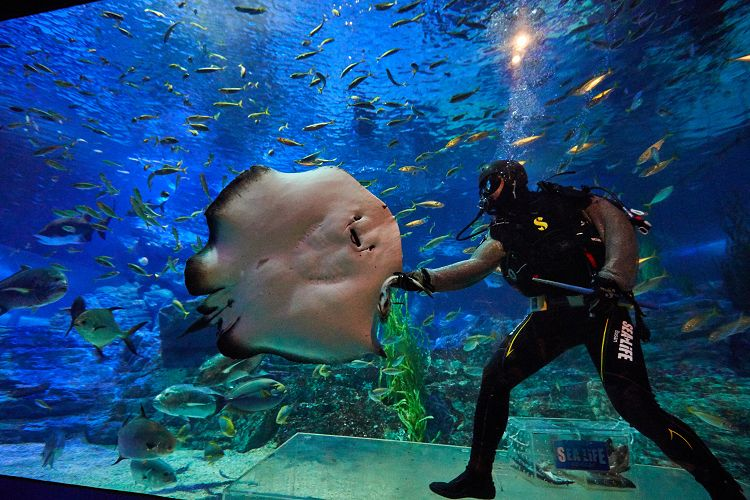 busan-sea-life-aquarium11.jpg