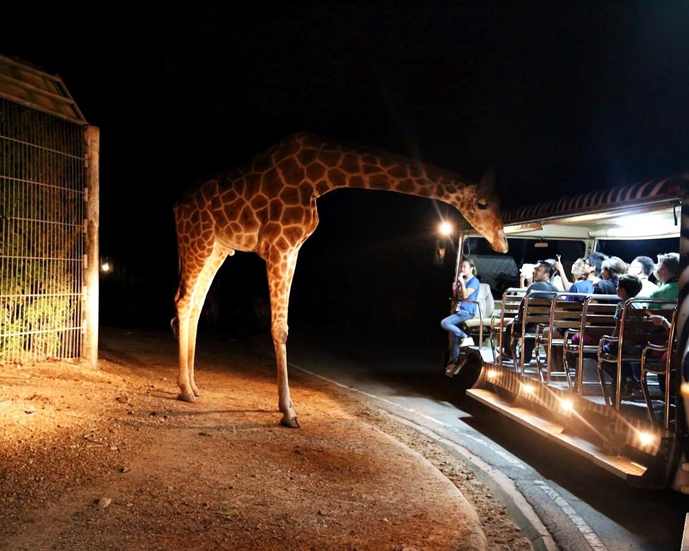 night_safari5.jpg