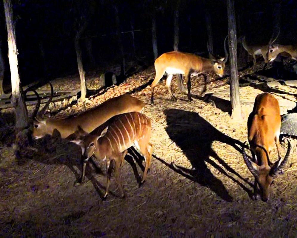 night_safari6.jpg