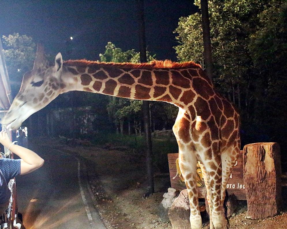 night_safari7.jpg