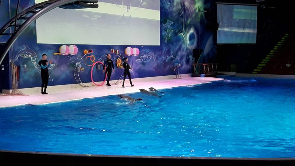dolphinarium5.jpg