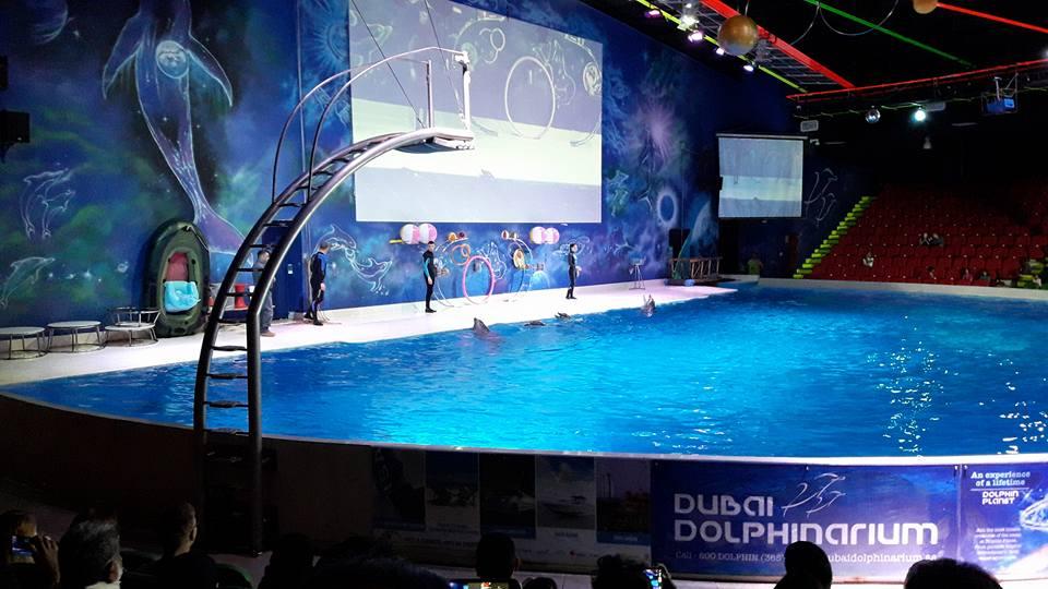 dolphinarium6.jpg