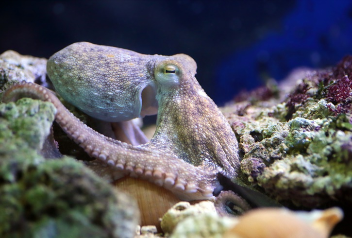 490london_sea_life_aquarium_1.jpg