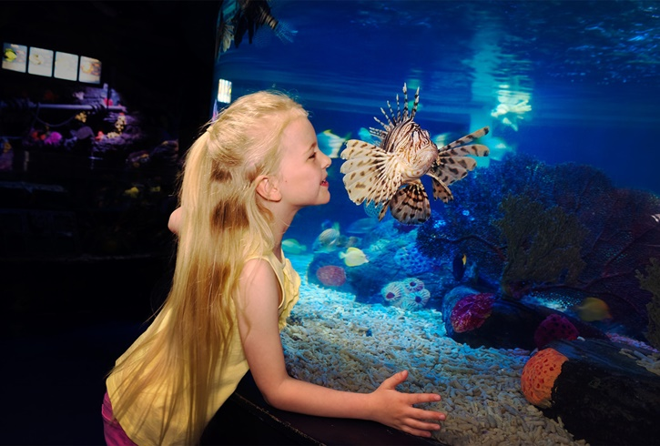490london_sea_life_aquarium_2.jpg