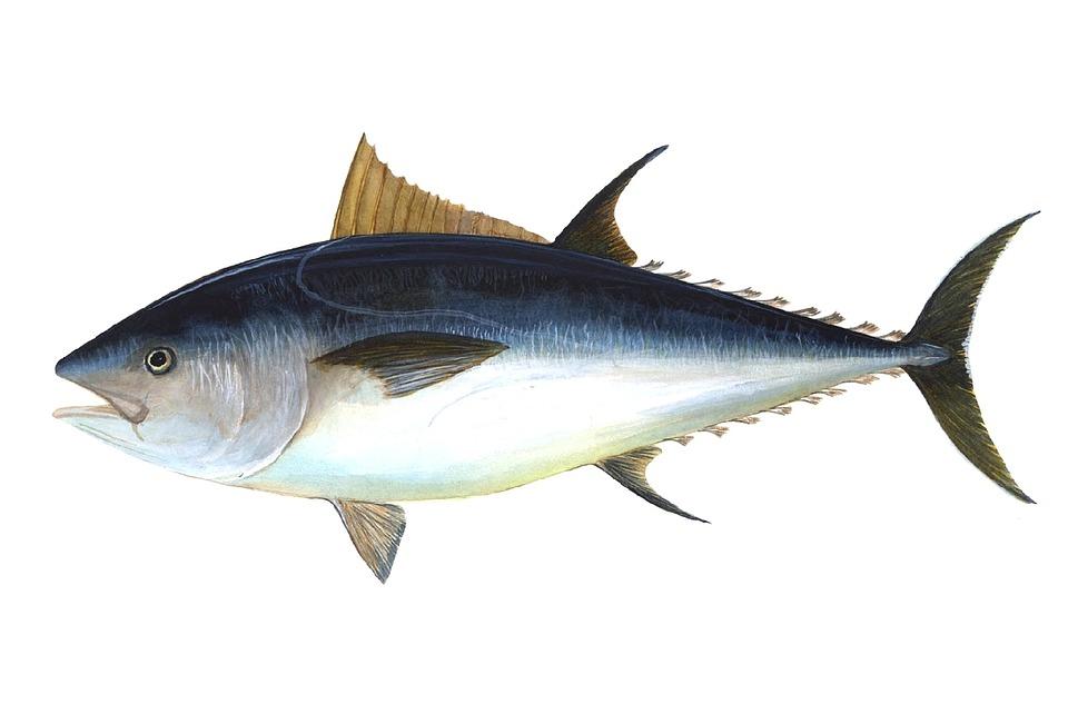 tuna-69317_960_720.jpg