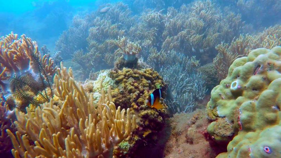 underwater(4).jpg