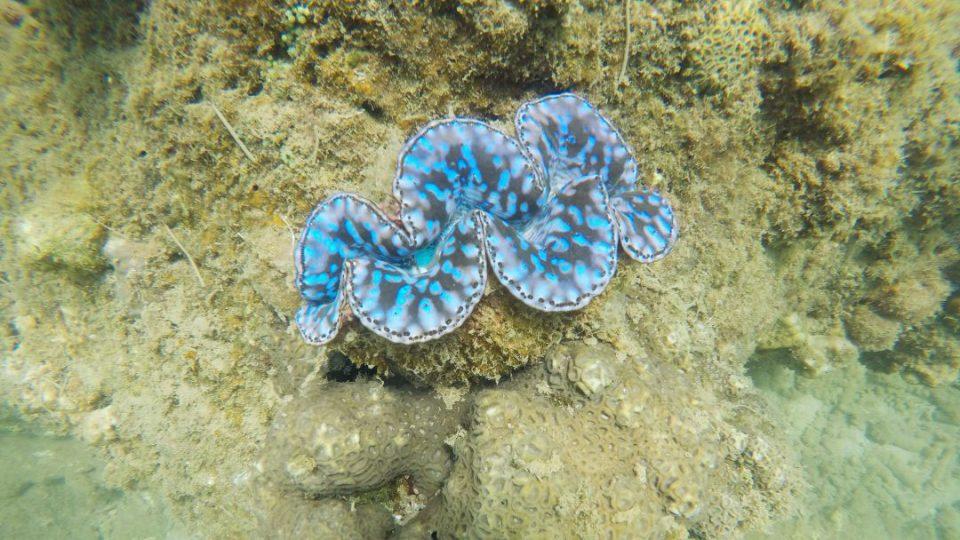 underwater(6).jpg