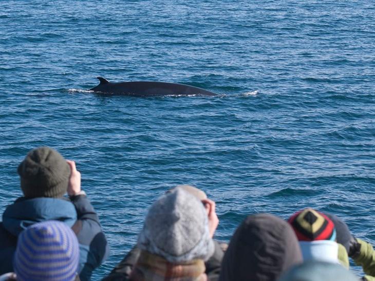 whale001.jpg