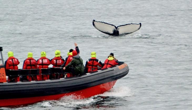 whale007.jpg