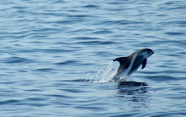 whale011.jpg