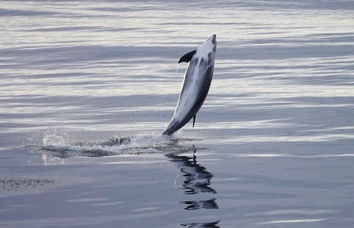 whale012.jpg