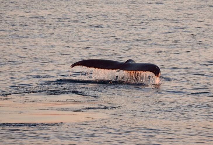 whale014.jpg