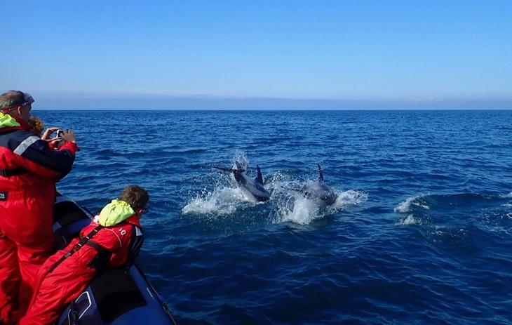whale015.jpg
