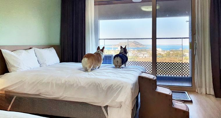 hijeju_hotel002.jpg