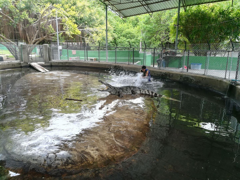 elephanttrekking4.jpg