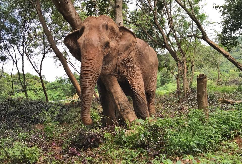 elephanttrekking6.jpg