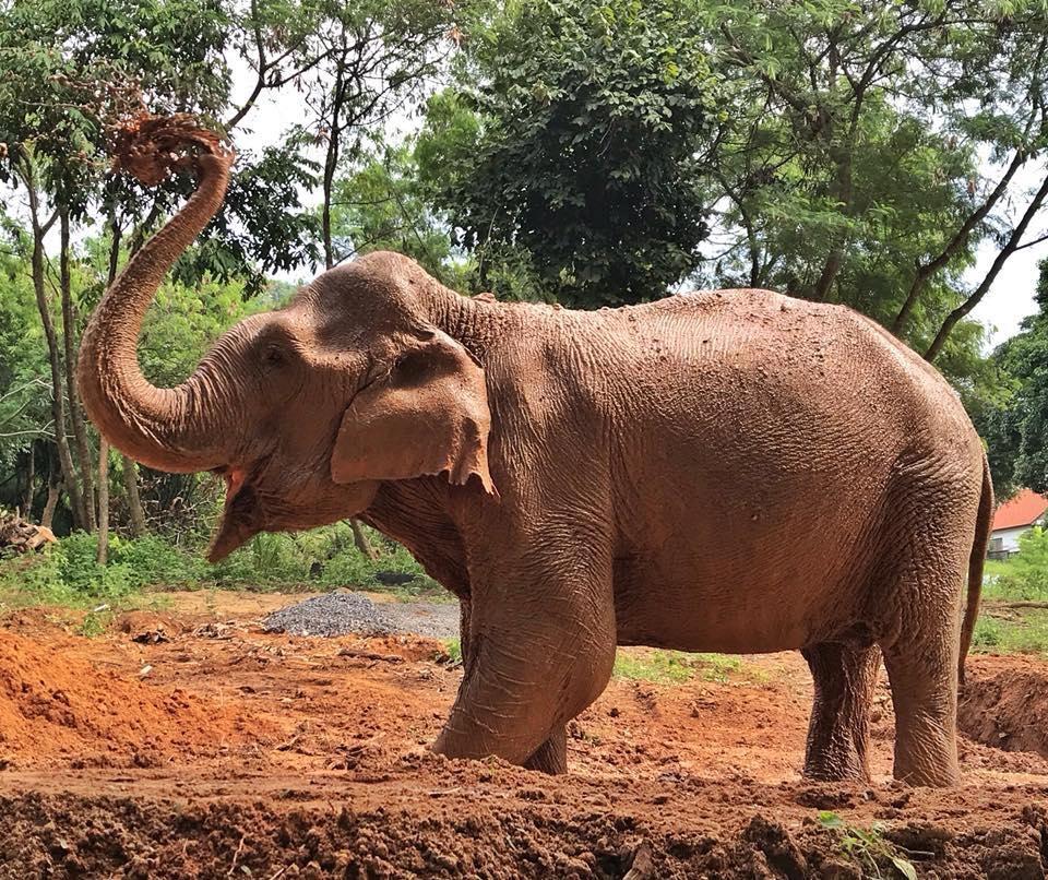 elephanttrekking7.jpg