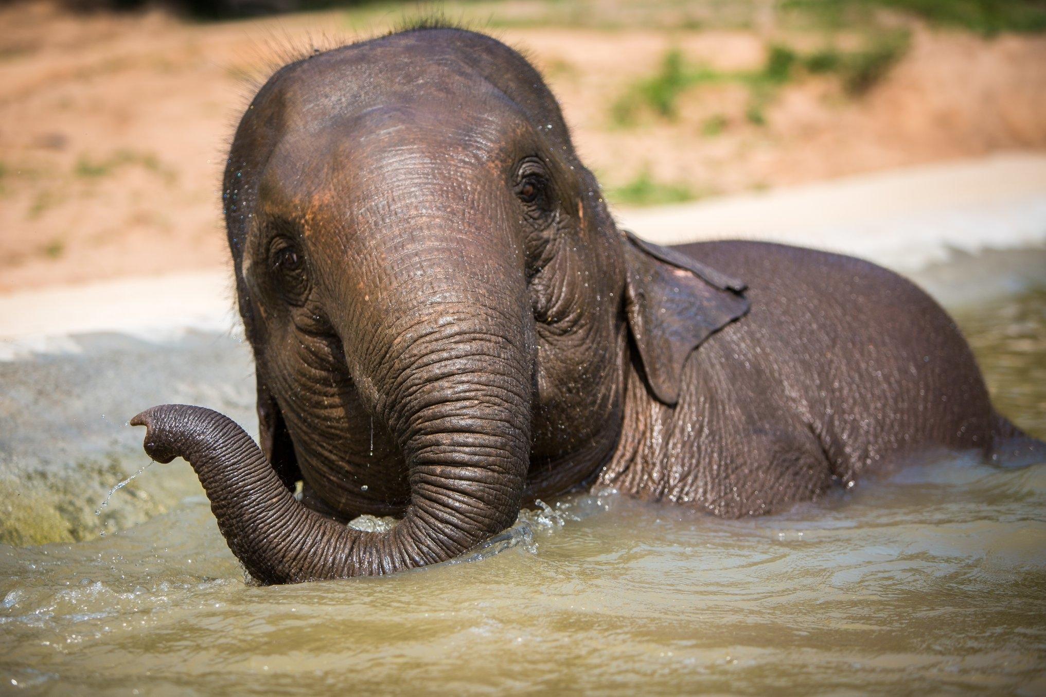 elephanttrekking9.jpg